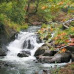 "Oct 5 (Thursday)  Tumwater ""Where the salmon  run"" Guided Walk"