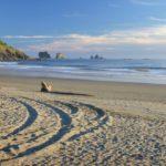 2019 Seabreeze Walking Festival at Ocean Shores, WA  Feb 16-18, 2019