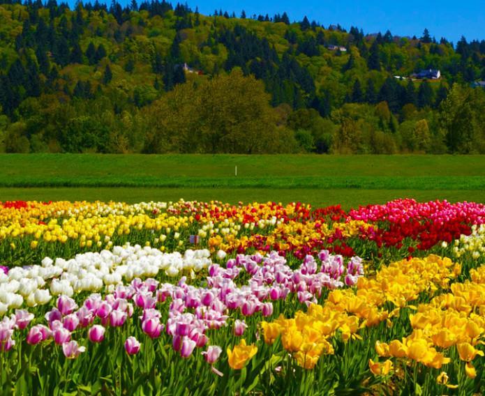 April 20  Woodland Tulip Guided Walk
